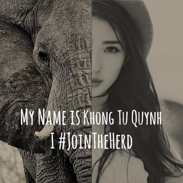 Có hơn 33.000 con voi bị săn lấy ngà mỗi năm, đẩy