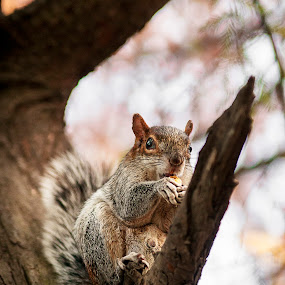 Lunch time by Christian Diboky - Animals Other Mammals ( orange, mexico, dinner, tree, mexico city, food, chapultepec, mexico d.f., eating, grey, brown, lunch, squirrel, animal,  )
