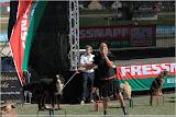 Vorstellung der Hunde