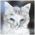 Animal Tap icon