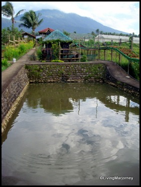 Costales Farm in Majayjay, Laguna (8)