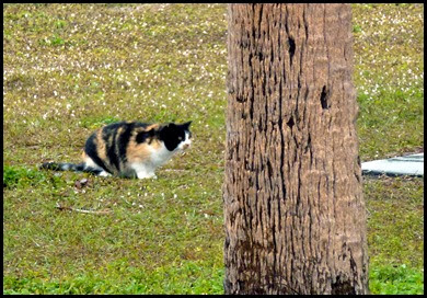 02a - Stalking Cat