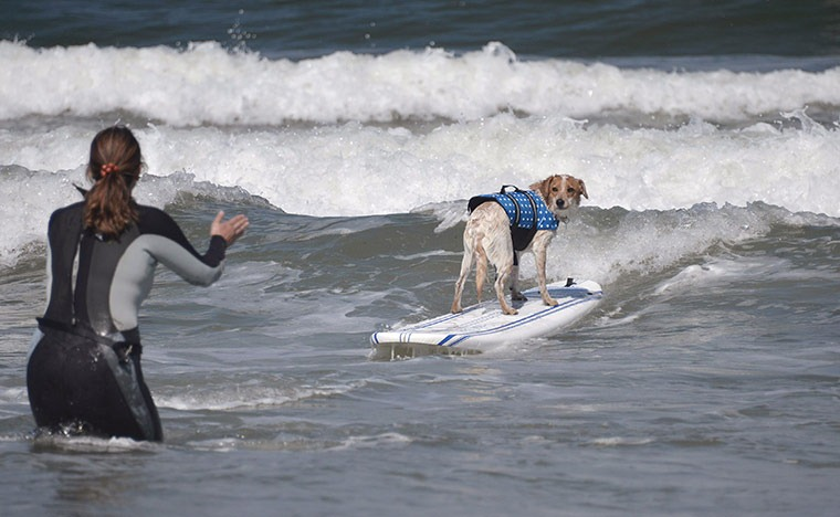 6th-surf-dog-comp3