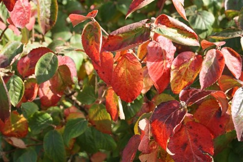 20081021 (1) (Small)
