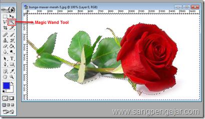 Menggunakan Magic Wand Tool Pada Photoshop Sangpengajar Com