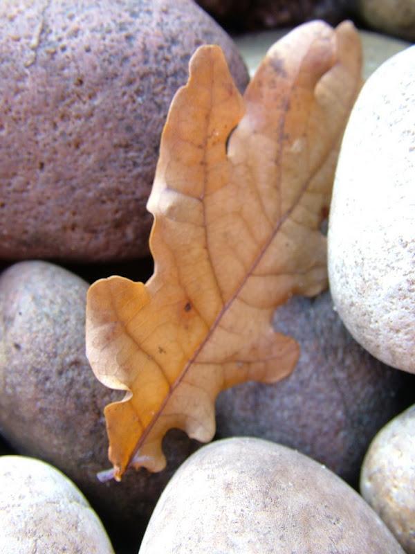 Autumn-Siobhan Donoher.JPG