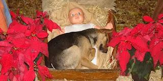 Một chú cún bị bỏ rơi tìm được một chỗ trú thân êm ái bên Hài Nhi Giêsu... các bức hình chụp được lan truyền đến chóng mặt