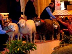 2007.03.05-018 concours moutons