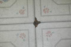 the floor 004