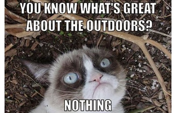 the great outdoors  cat camping