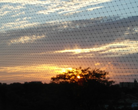 Sunset through my pigeon netting (2)