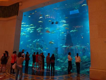 Obiective turistice Dubai: Atlantis Dubai