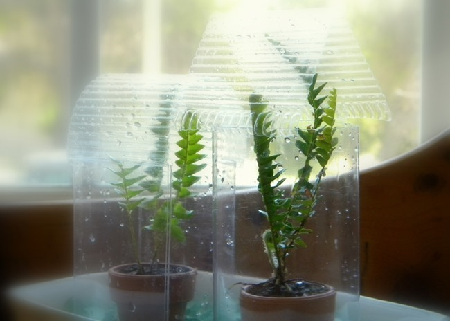 Recycled Plastic Mini Greenhouses via homework | carolynshomework.com