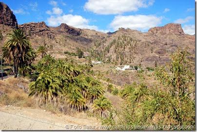 6803 Presa de las Niñas-Soria(Palmeral de Soria)