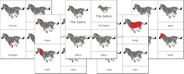 Africa Continent Zebra Nomenclature Cards