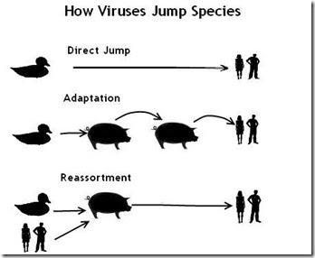 Avian flu influenza a virus essay