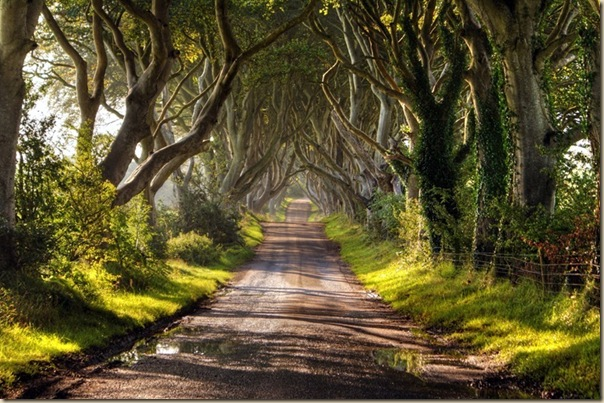 The-dark-hedges-006