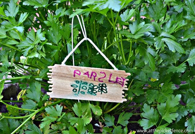 parsley garden marker