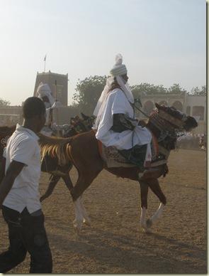 arabian horse!(1)