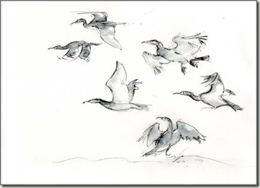 cormorants paxton