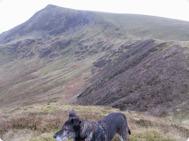 lonscale fell from burnt horse