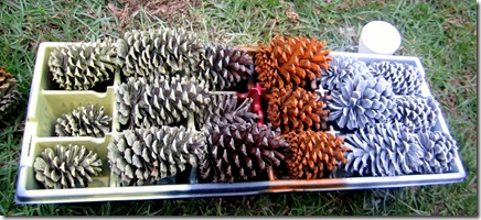 Spray Painted Pinecones