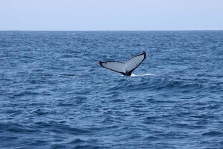 Imagini Australia: Sydney O balena ne spune la revedere