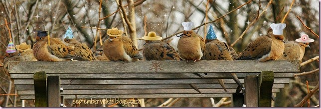 Doves in Hats