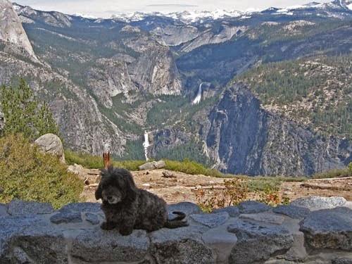 Skruffy Yosemite National Park