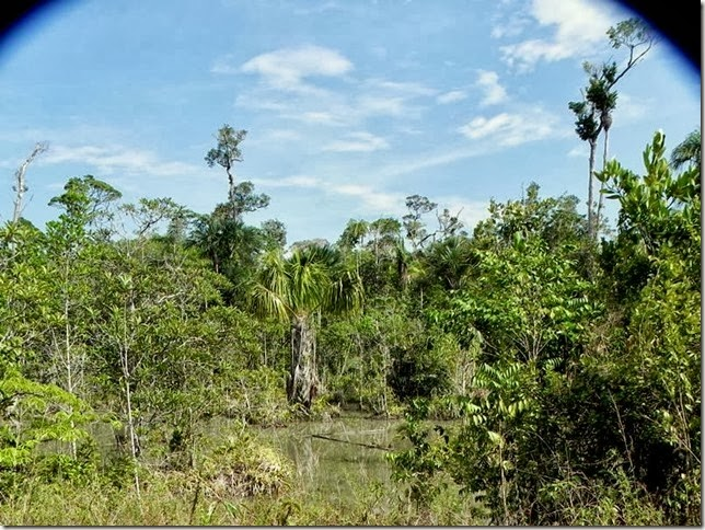 BR-319_Humaita_Manaus_Day_4_DSCN7889