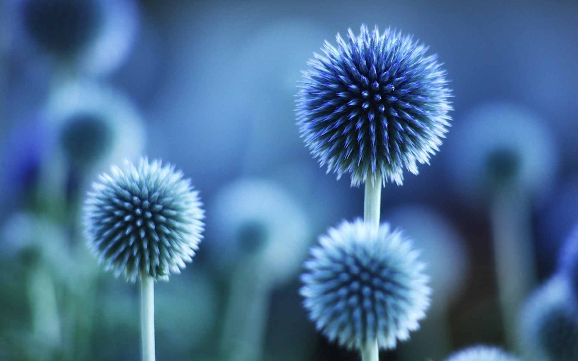 Oval Blue Color Flowers Wallpapers Hd Wallpapers