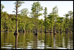 08 - Paddling amongst the Cypress Trees