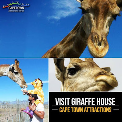 A visit to GiraffeHouse is an amazing opportunity to meet the tallest