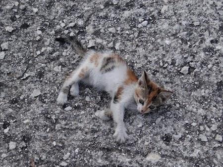 25. Pisica de Corfu.JPG