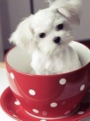 cup-of-puppy_wallpapere telefon