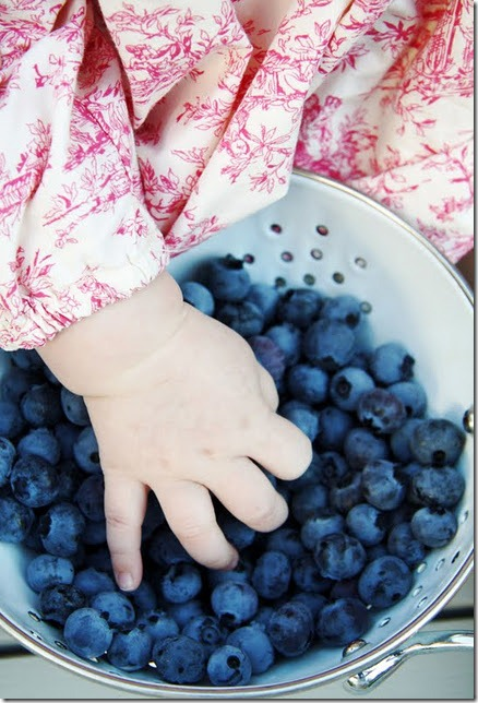 First Blueberry Harvest at A Country Farmhouse