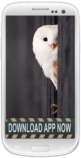 Owl Android Live Wallpapers