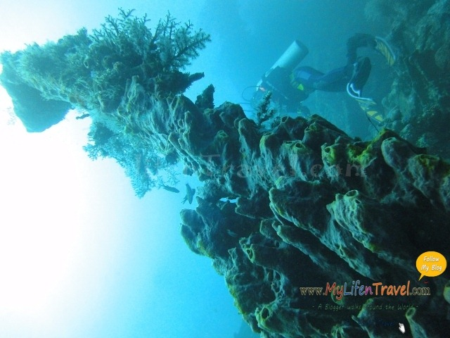 Diving Amed Bali 38