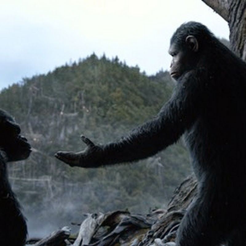 "Hear Ye! Prime Ape Caesar in ""Dawn of the Planet of the Apes"""