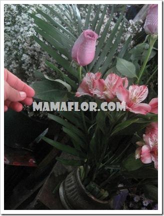 mamaflor-3169