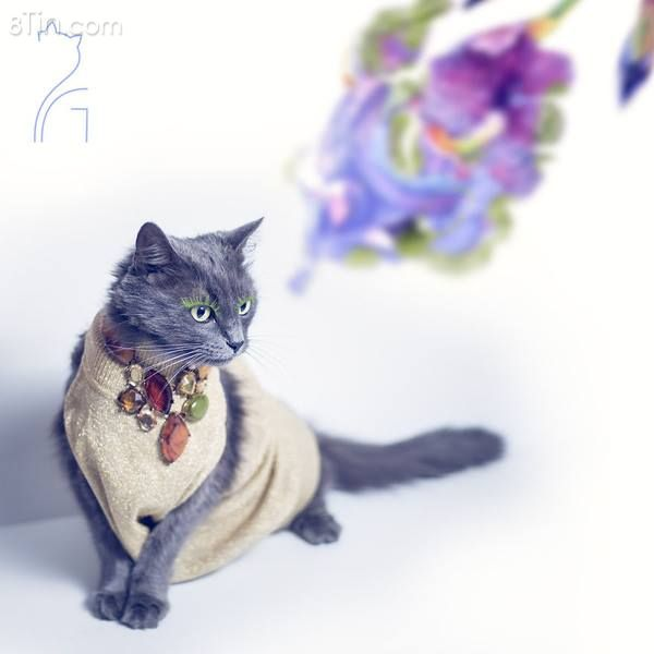 """Nàng mèo xinh đẹp """"vượt khó"""" trở thành fashionista sành điệu"""