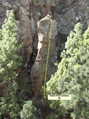 18 Totem Pole Canario