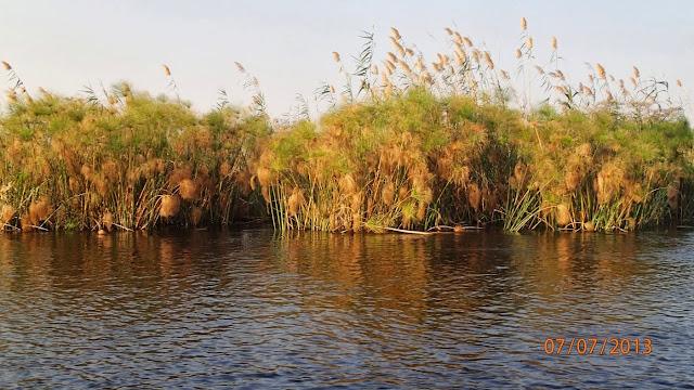 Kwando River 044.JPG