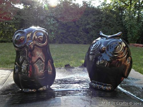 orb owls