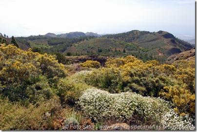 5808 Pico las Nieves-Temisas