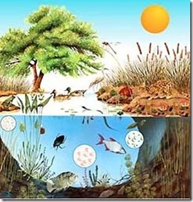 grupos taxonomicos