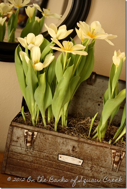 Tulips in the Toolbox