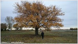 Поздняя осень. Фото Лобанова В. www.timeteka.ru