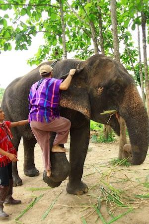Imagini Thailanda: Dragos urcand pe elefant, Patara, Thailanda
