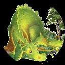 Image Google de alie rose